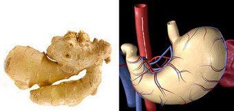ginger-stomaco