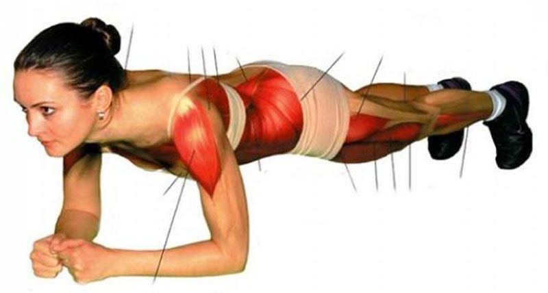 esercizio-muscoli
