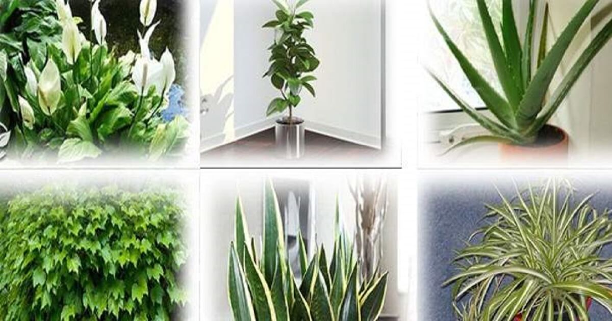 Insonnia: le 8 piante da tenere in camera da letto per dormire meglio.