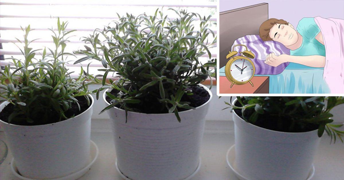 Insonnia le 8 piante da tenere in camera da letto per - Piante da tenere in camera da letto ...