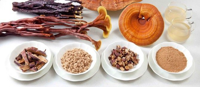 funghi-medicinali