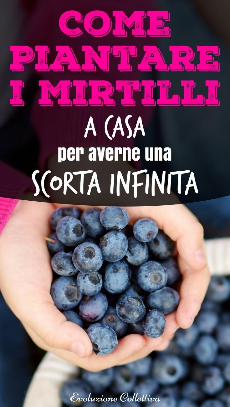 #coltivareacasa #mirtilli #faidate #evoluzionecollettiva